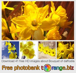 Image bank tOrange offers free photos from the section:  bouquet-daffodils