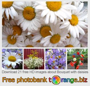 images free photo bank tOrange offers free photos from the section:  bouquet-daisies