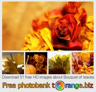images free photo bank tOrange offers free photos from the section:  bouquet-leaves