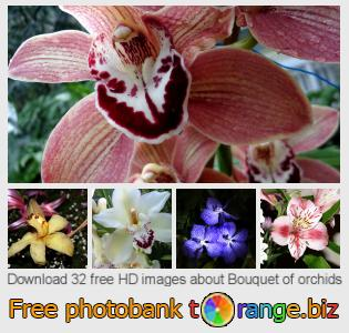 images free photo bank tOrange offers free photos from the section:  bouquet-orchids