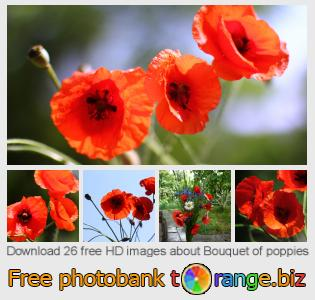 Image bank tOrange offers free photos from the section:  bouquet-poppies