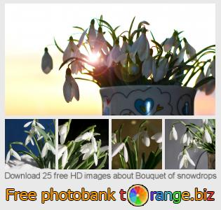 images free photo bank tOrange offers free photos from the section:  bouquet-snowdrops