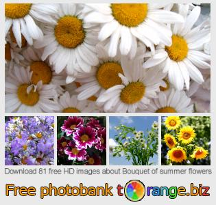 images free photo bank tOrange offers free photos from the section:  bouquet-summer-flowers