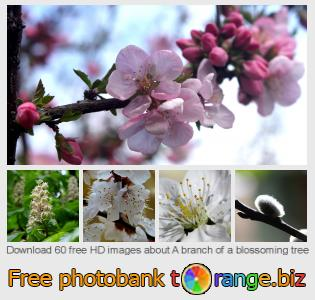 Image bank tOrange offers free photos from the section:  branch-blossoming-tree