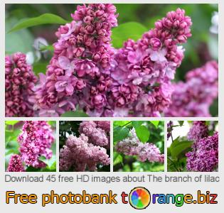 Image bank tOrange offers free photos from the section:  branch-lilac