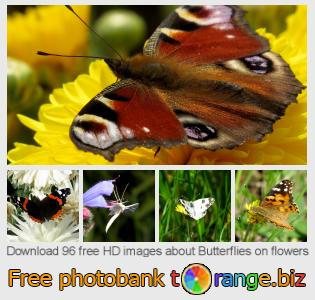 Image bank tOrange offers free photos from the section:  butterflies-flowers