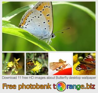 Image bank tOrange offers free photos from the section:  butterfly-desktop-wallpaper