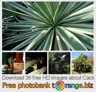 images free photo bank tOrange offers free photos from the section:  cacti