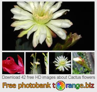 images free photo bank tOrange offers free photos from the section:  cactus-flowers