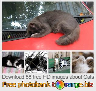 images free photo bank tOrange offers free photos from the section:  cats
