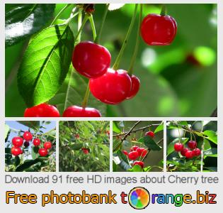 images free photo bank tOrange offers free photos from the section:  cherry-tree