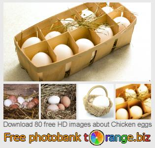 Image bank tOrange offers free photos from the section:  chicken-eggs