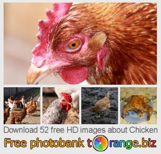 images free photo bank tOrange offers free photos from the section:  chicken