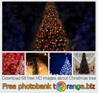 images free photo bank tOrange offers free photos from the section:  christmas-tree