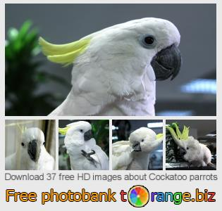 images free photo bank tOrange offers free photos from the section:  cockatoo-parrots