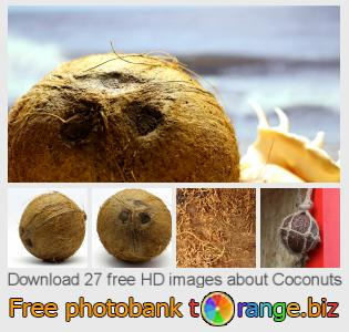Image bank tOrange offers free photos from the section:  coconuts