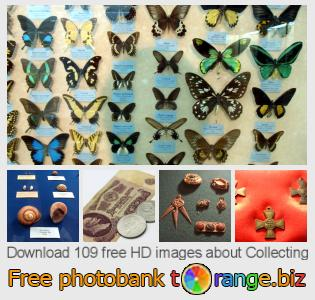 images free photo bank tOrange offers free photos from the section:  collecting