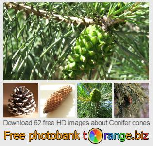 images free photo bank tOrange offers free photos from the section:  conifer-cones