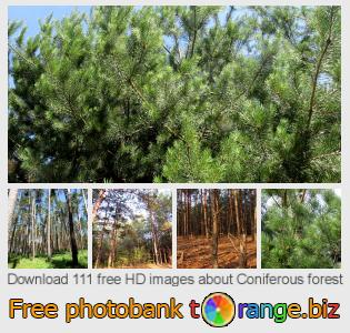 Image bank tOrange offers free photos from the section:  coniferous-forest