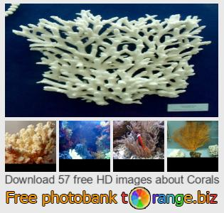 images free photo bank tOrange offers free photos from the section:  corals