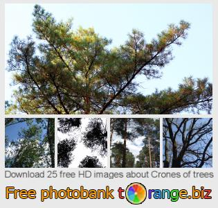 images free photo bank tOrange offers free photos from the section:  crones-trees