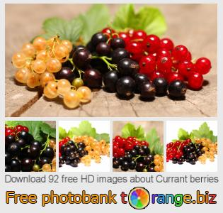 Image bank tOrange offers free photos from the section:  currant-berries