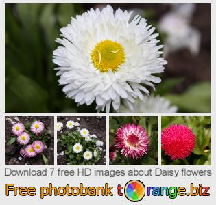 images free photo bank tOrange offers free photos from the section:  daisy-flowers