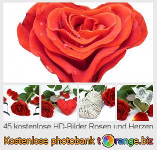 Rosen Und Herzen (45)