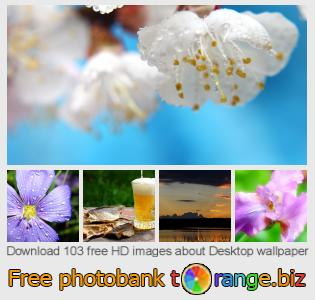 Image bank tOrange offers free photos from the section:  desktop-wallpaper