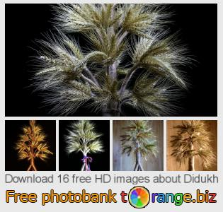 Image bank tOrange offers free photos from the section:  didukh