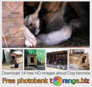 images free photo bank tOrange offers free photos from the section:  dog-kennels