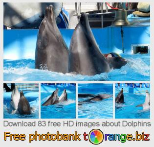 images free photo bank tOrange offers free photos from the section:  dolphins
