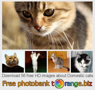 images free photo bank tOrange offers free photos from the section:  domestic-cats