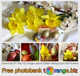 Image bank tOrange offers free photos from the section:  easter-background-flowers