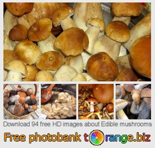 images free photo bank tOrange offers free photos from the section:  edible-mushrooms
