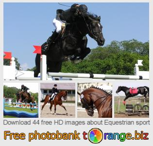 Image bank tOrange offers free photos from the section:  equestrian-sport