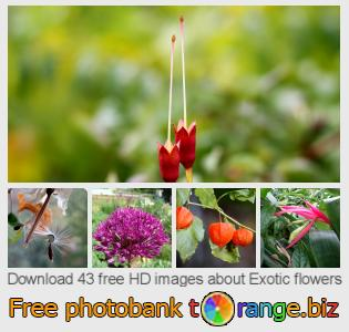images free photo bank tOrange offers free photos from the section:  exotic-flowers