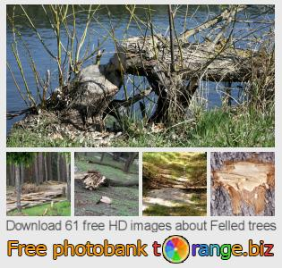 images free photo bank tOrange offers free photos from the section:  felled-trees