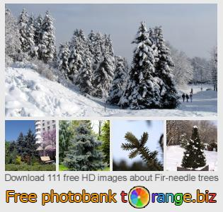 images free photo bank tOrange offers free photos from the section:  fir-needle-trees