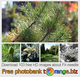 Image bank tOrange offers free photos from the section:  fir-needle