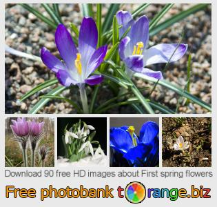 images free photo bank tOrange offers free photos from the section:  first-spring-flowers