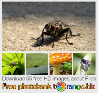 images free photo bank tOrange offers free photos from the section:  flies
