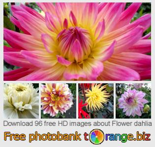 images free photo bank tOrange offers free photos from the section:  flower-dahlia