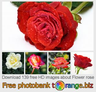 Image bank tOrange offers free photos from the section:  flower-rose