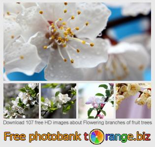 images free photo bank tOrange offers free photos from the section:  flowering-branches-fruit-trees