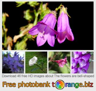 images free photo bank tOrange offers free photos from the section:  flowers-bell-shaped
