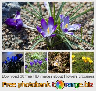 images free photo bank tOrange offers free photos from the section:  flowers-crocuses