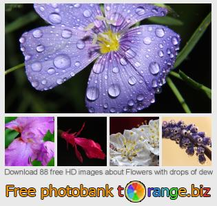 images free photo bank tOrange offers free photos from the section:  flowers-drops-dew