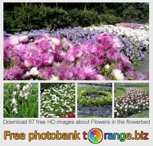 images free photo bank tOrange offers free photos from the section:  flowers-flowerbed
