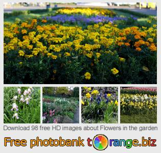Image bank tOrange offers free photos from the section:  flowers-garden